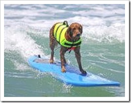 Title%20surfin%20paws