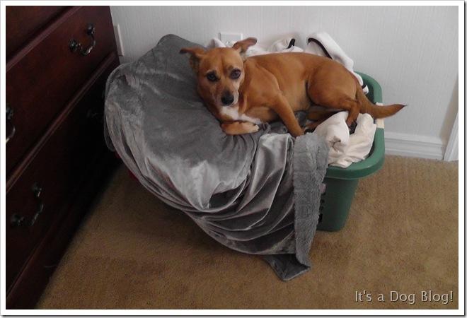 penny_laundry