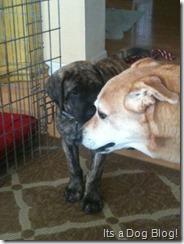 Samson and Toni